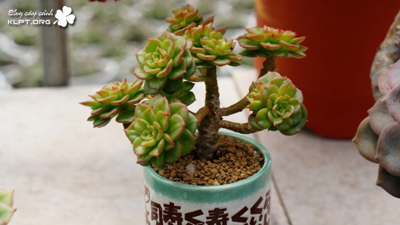 cactus-garden-bien-hoa-klpt