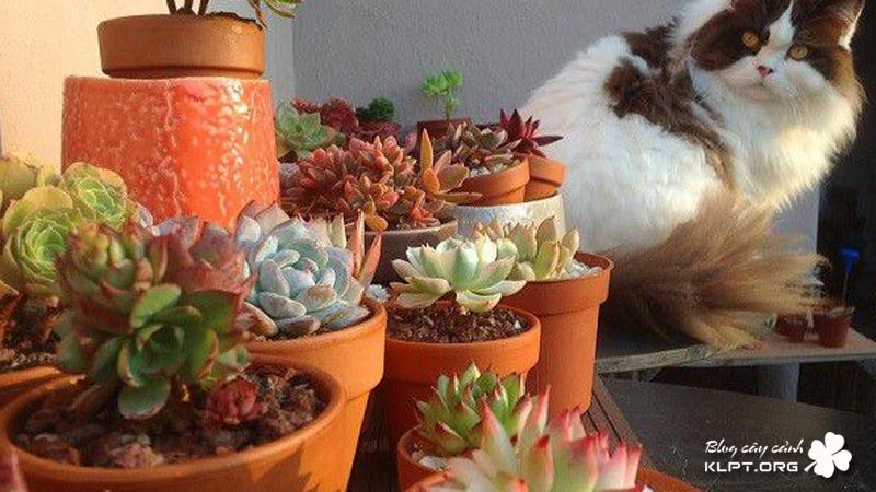 chuot-garden-klpt