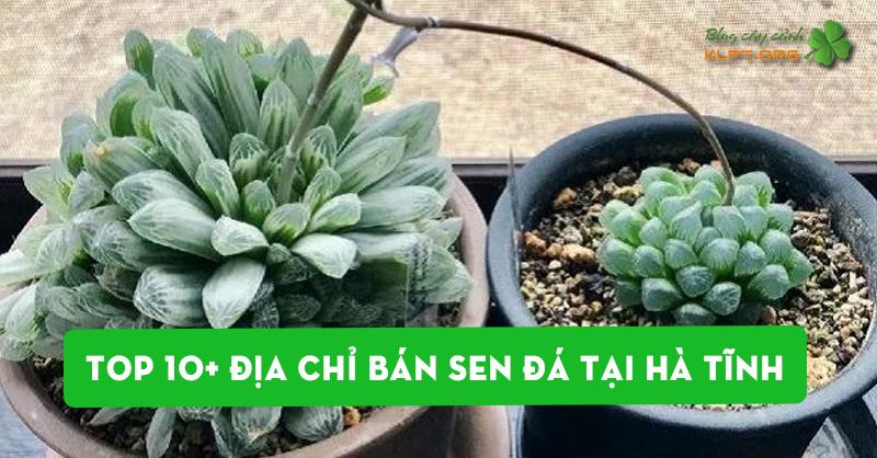 diem-danh-10-dia-chi-ban-sen-da-tai-ha-tinh