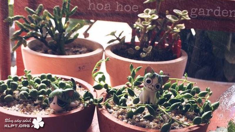 hoa-hoe-garden-klpt