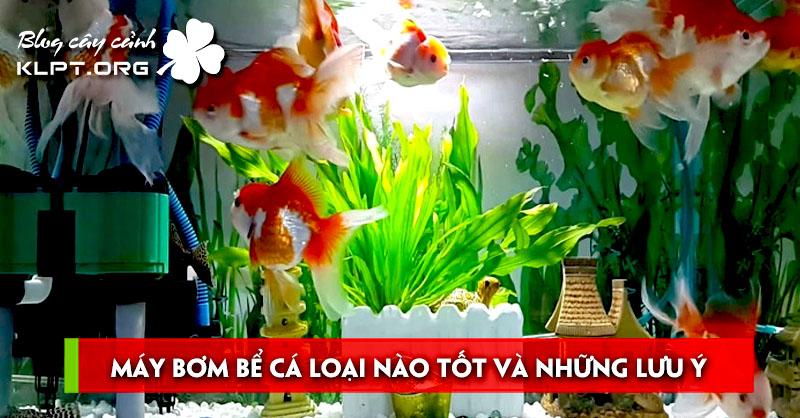 may-bom-be-ca-loai-nao-tot-va-nhung-luu-y-tranh-hong-may