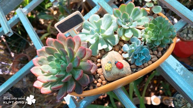 mr-flower-garden-klpt-1