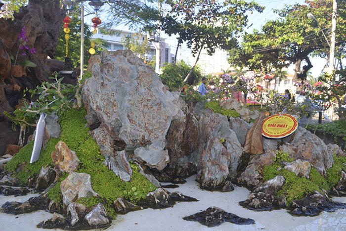 nhung-cay-canh-doc-la-co-gia-hang-tram-trieu-dong-van-duoc-san-don-12-klpt