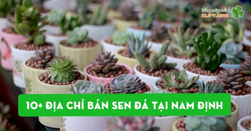 say-me-voi-10-dia-chi-ban-sen-da-tai-nam-dinh