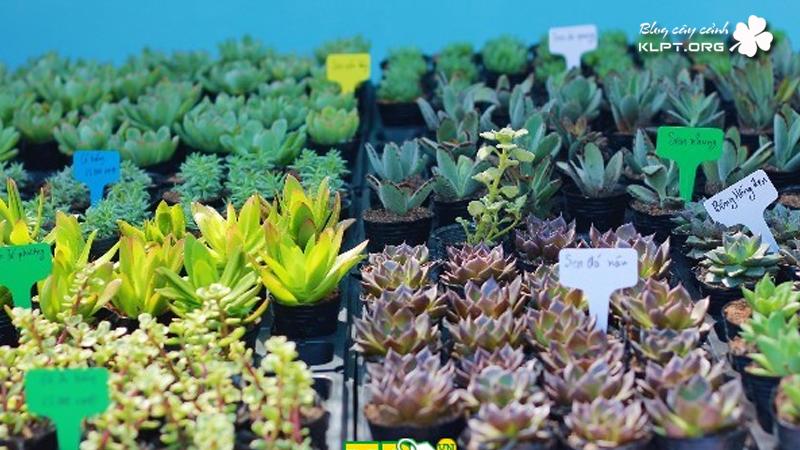 sen-da-mini-plant-garden-nghe-an-klpt