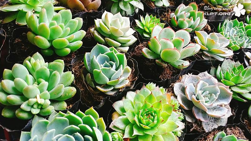 sen-da-tan-an-kids-garden-klpt-1