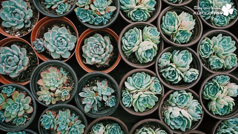 succulent-garden-vuon-sen-da-klpt