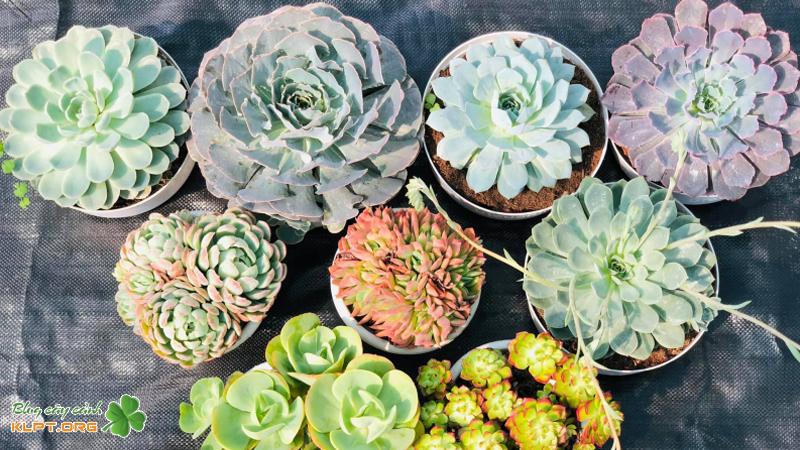 suha-garden-nha-trang-klpt