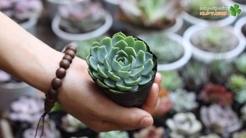 tiny-garden-klpt