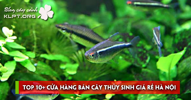 top-10-cua-hang-ban-cay-thuy-sinh-gia-re-ha-noi-uy-tin-nhat