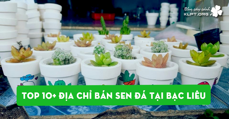 top-10-dia-chi-ban-sen-da-tai-bac-lieu