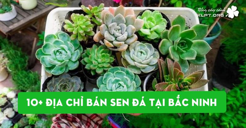 top-10-dia-chi-ban-sen-da-tai-bac-ninh