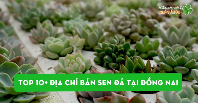top-10-dia-chi-ban-sen-da-tai-dong-nai
