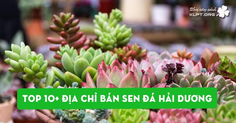 top-10-dia-chi-ban-sen-da-tai-hai-duong