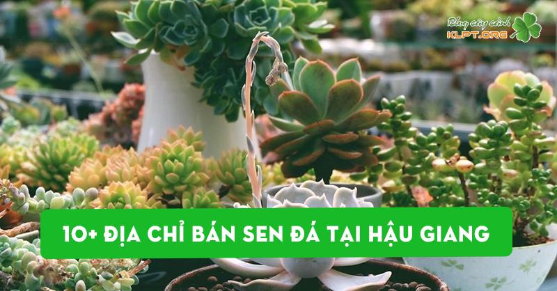 top-10-dia-chi-ban-sen-da-tai-hau-giang
