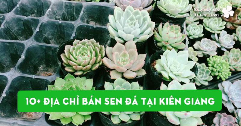 top-10-dia-chi-ban-sen-da-tai-kien-giang-dep-chat-luong
