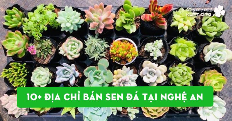 top-10-dia-chi-ban-sen-da-tai-nghe-an