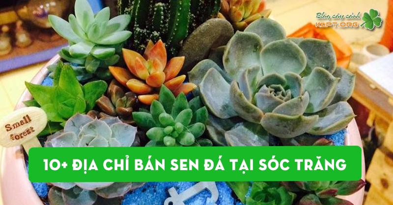 top-10-dia-chi-ban-sen-da-tai-soc-trang-dep-re