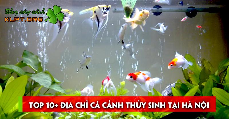 top-10-dia-chi-ca-canh-thuy-sinh-tai-ha-noi