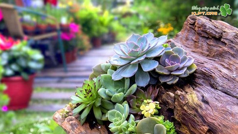 treo's-garden-klpt-1