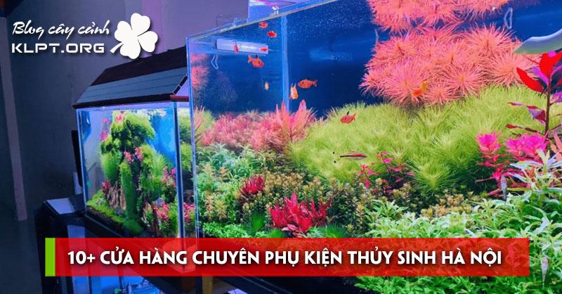 10-cua-hang-chuyen-phu-kien-thuy-sinh-ha-noi-gia-re