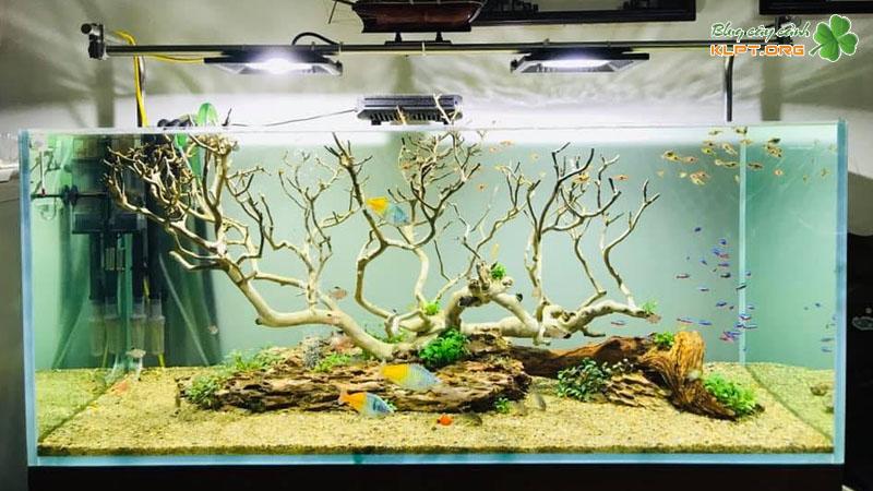 sh-aquarium-klpt