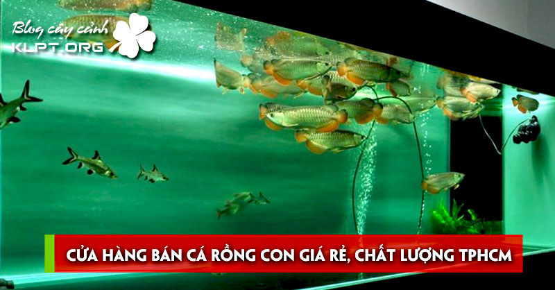 top-cua-hang-ban-ca-rong-con-gia-re-chat-luong